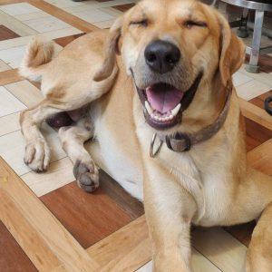 Bruno indie dog