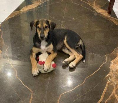 indie pup in west patel nagar